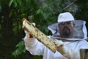 Bill with Bees