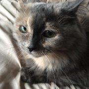 Colleen's Cat
